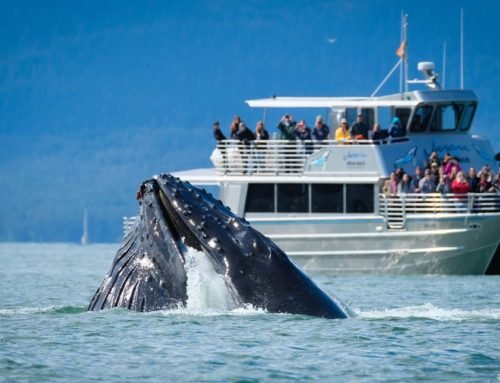 What Wildlife Will I See in Juneau, Alaska?