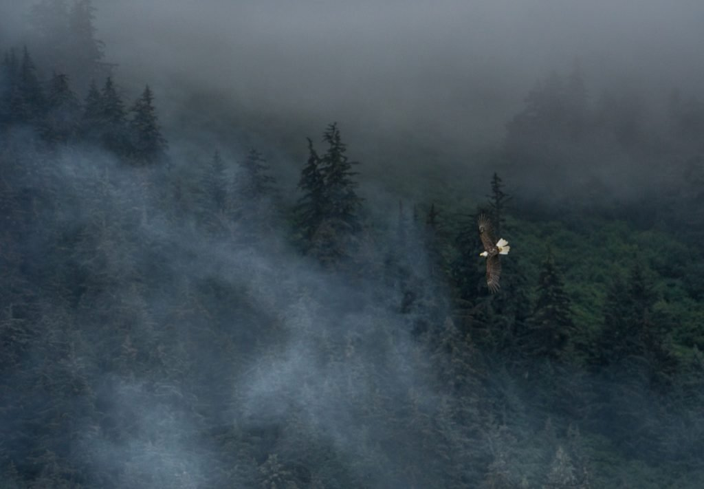 You can't miss Juneau's primordial mist engulfing the rainforest.