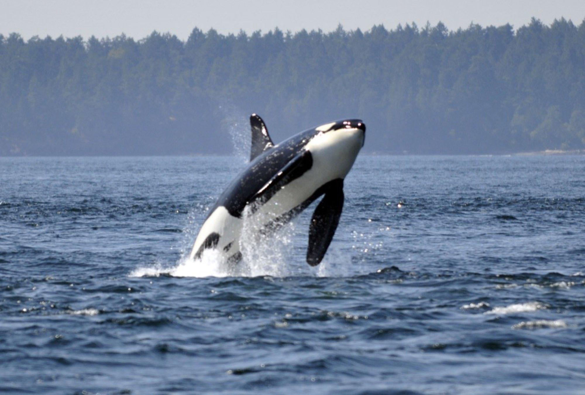 How a travel expert explores Juneau